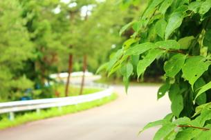 道路と葉の写真素材 [FYI00254264]