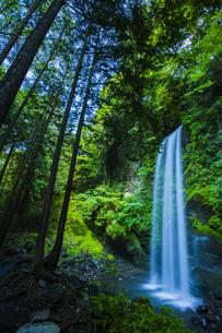 新緑と夕日の滝の写真素材 [FYI00254289]