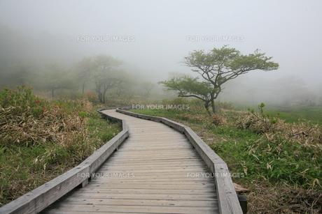 赤城山の覚満淵の木道の素材 [FYI00254373]
