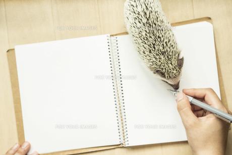 ハリネズミと手帳の写真素材 [FYI00254767]