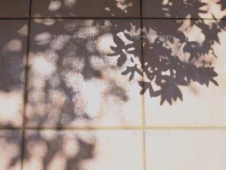 日常の断片の素材 [FYI00254860]