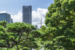 浜離宮恩賜庭園の新樋の口山から望む東京タワーの写真素材 [FYI00254988]