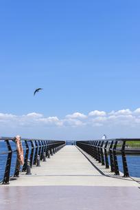 海辺の公園/東扇島東公園の遊歩道の写真素材 [FYI00255048]