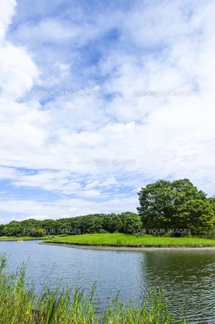昭和記念公園の素材 [FYI00255077]