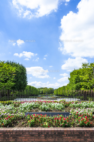 昭和記念公園の素材 [FYI00255092]