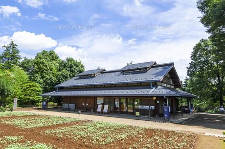 昭和記念公園のこもれびの里の素材 [FYI00255096]