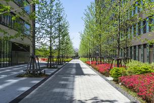 中野駅北口再開発エリア中野セントラルパークのキャンパスロードの写真素材 [FYI00255129]