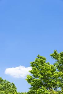 中野平和の森公園に広がる爽やかな青空と新緑の緑の写真素材 [FYI00255146]