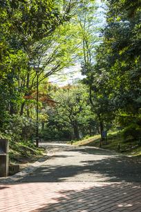 中野平和の森公園の遊歩道の写真素材 [FYI00255148]