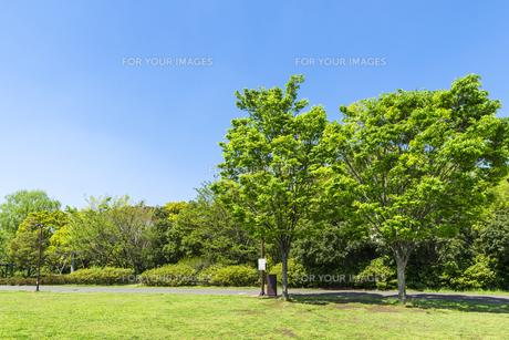 中野平和の森公園芝生広場の素材 [FYI00255155]
