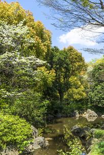 中野平和の森公園に広がる青空と新緑と水のコントラストの写真素材 [FYI00255163]