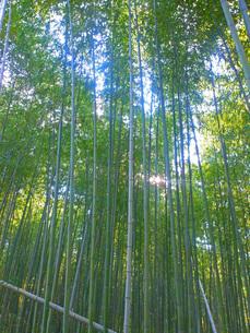 竹藪の写真素材 [FYI00255389]