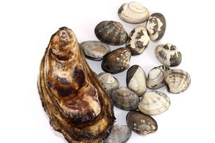 牡蠣と浅利の写真素材 [FYI00255617]