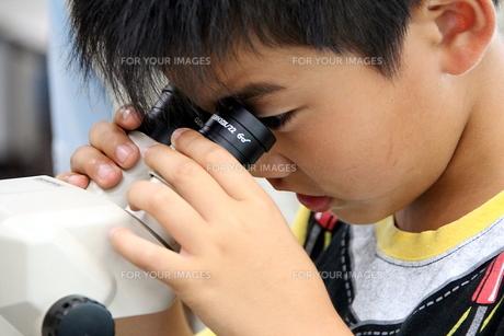 顕微鏡をのぞく子の写真素材 [FYI00255668]