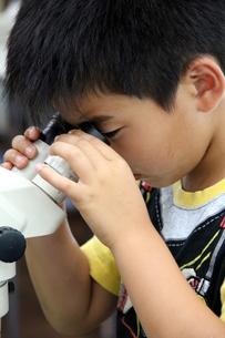 顕微鏡をのぞく子の写真素材 [FYI00255670]