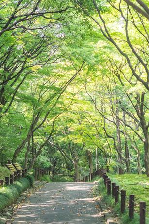 北の丸公園の遊歩道の写真素材 [FYI00255675]