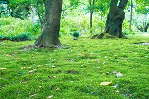 敷き詰められた苔の写真素材 [FYI00255679]