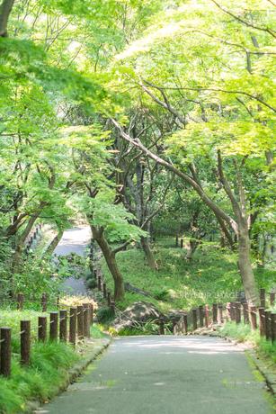 北の丸公園の遊歩道の写真素材 [FYI00255689]
