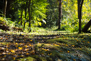 Autumn forest pathの写真素材 [FYI00255737]