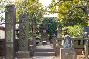 鈴木九郎長者墓の写真素材 [FYI00255834]