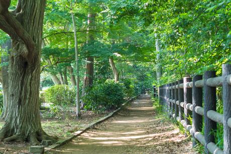 井の頭恩賜公園の遊歩道の写真素材 [FYI00255905]