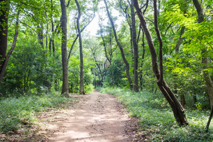 八国山緑地の遊歩道の写真素材 [FYI00255937]