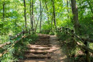 八国山緑地の遊歩道の写真素材 [FYI00255956]