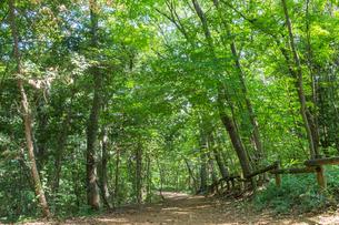 八国山緑地の遊歩道の写真素材 [FYI00255957]