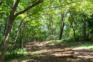 八国山緑地の遊歩道の写真素材 [FYI00255973]