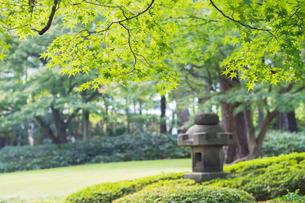 大田黒公園の日本庭園の素材 [FYI00255978]