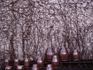 蔦と陶器の写真素材 [FYI00256298]