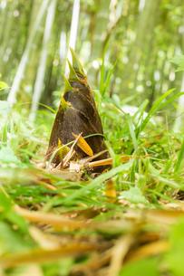 竹の子の写真素材 [FYI00256957]
