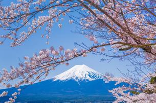 富士山と桜の風景の写真素材 [FYI00257125]