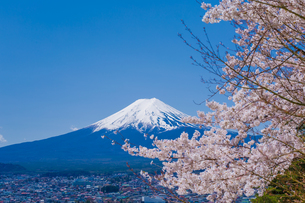 富士山と桜の風景の写真素材 [FYI00257146]
