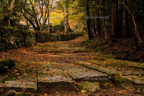 百済寺の石段の写真素材 [FYI00257187]
