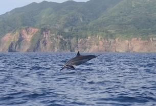 飛ぶハシナガイルカの写真素材 [FYI00257449]