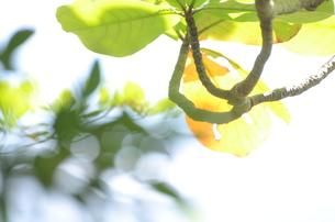 光の中の写真素材 [FYI00257457]