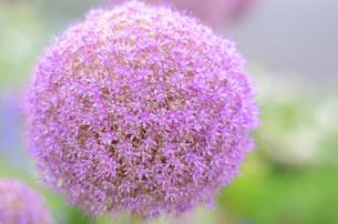 FLOWER PLANETの写真素材 [FYI00257492]