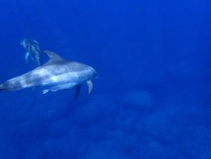 イルカの写真素材 [FYI00257503]