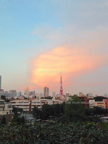 東京タワーのある風景の写真素材 [FYI00257526]
