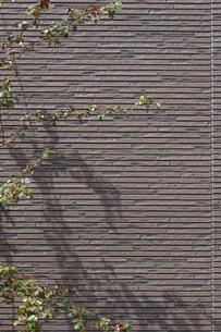 壁に落ちる立木の影の写真素材 [FYI00257704]