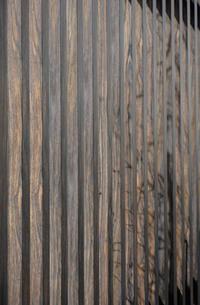 塀に浮かぶ立木の影の写真素材 [FYI00257727]