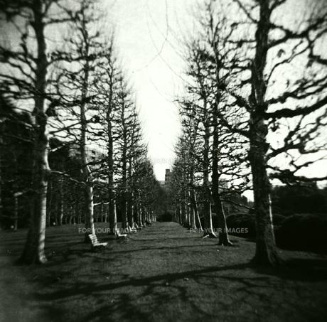 Black Autumnの写真素材 [FYI00257752]
