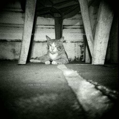 Street Catの写真素材 [FYI00257775]