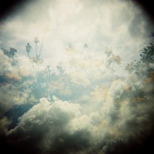 SkyFlowerの写真素材 [FYI00257785]