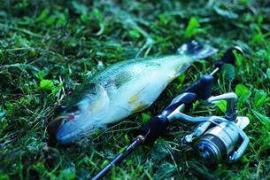 釣りの写真素材 [FYI00258152]