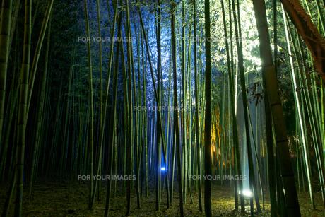 京都嵐山の竹林のライトアップの写真素材 [FYI00258187]