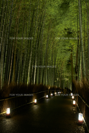 京都嵐山の竹林のライトアップの写真素材 [FYI00258189]