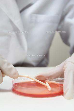 研究イメージ 微生物試験の写真素材 [FYI00259256]
