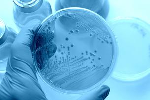 実験 微生物検査の写真素材 [FYI00259428]